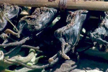 """Malaui: El gobierno recomienda comer """"brochetas de ratón"""" para ahuyentar al hambre"""