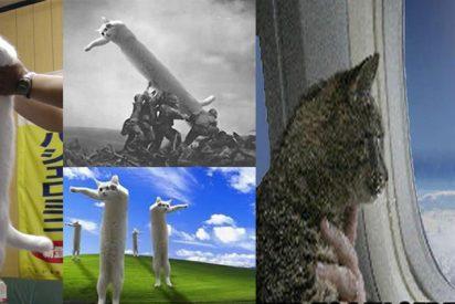 Fallece Nobiko, el famoso 'gato largo' de internet y una leyenda de los memes