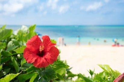 propiedades de hibiscus