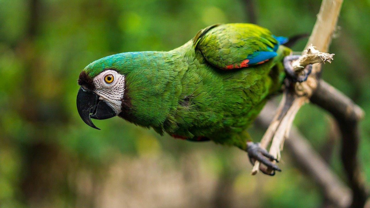 Cinco loros de un zoo acostumbrados a insultar a los visitantes, ¡al calabozo!