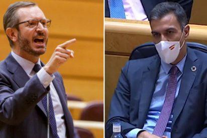"""Maroto (PP) avergüenza a Sánchez en el Senado: """"¡Qué buen aspecto, qué bronceado!"""""""
