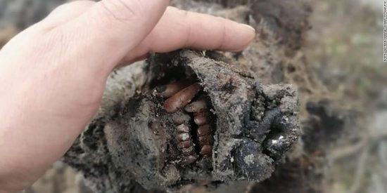 El asombroso descubrimiento en Siberia: ¡El cuerpo intacto de unoso de las cavernasde la Edad de Hielo!