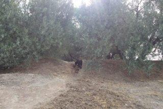 Se resuelve el misterio de 'la pantera de Granada': un fotógrafo capta al gato negro que trajo el terror