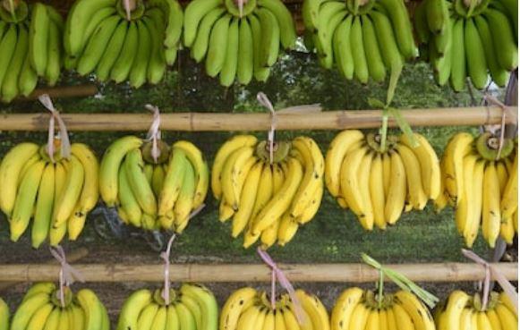 plátanos colgados