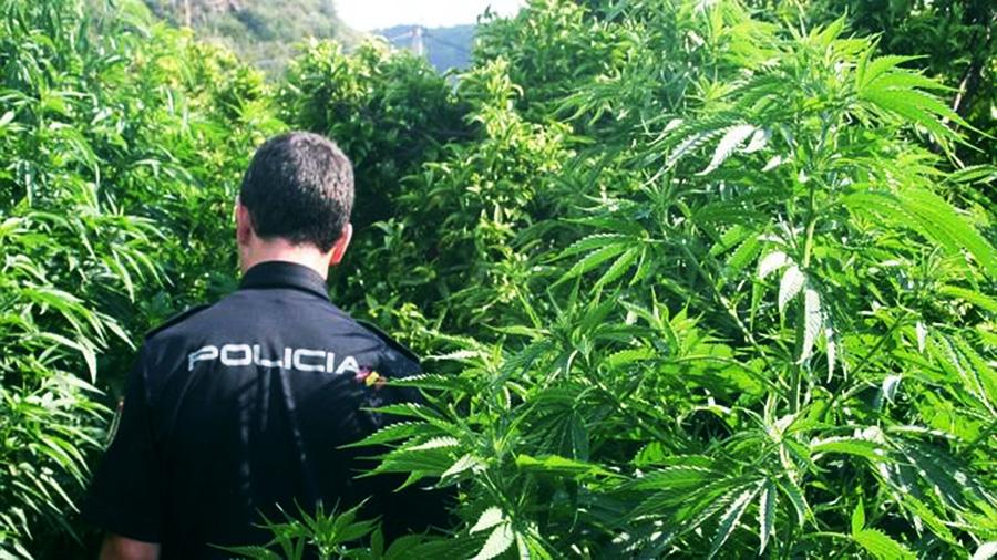 Tres hombres que van robar marihuana terminan encañonados y fotografiados desnudos en Vizcaya
