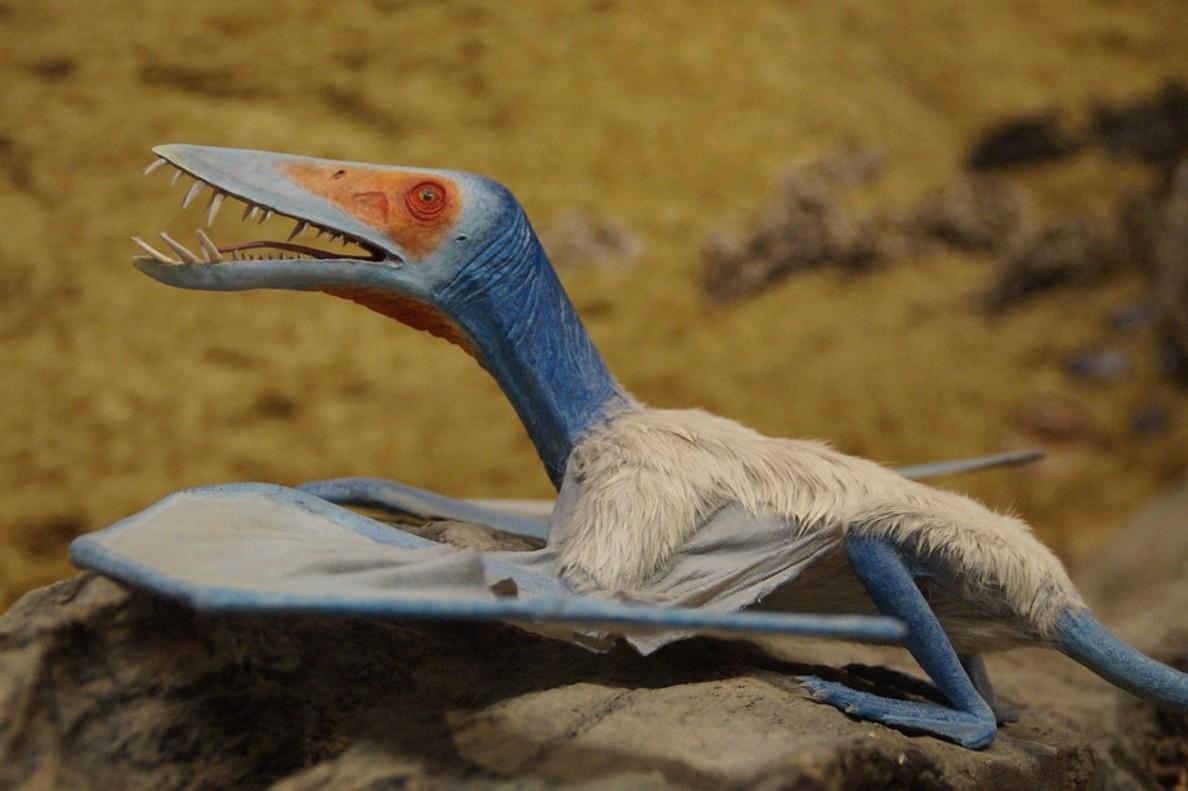 Descubren una nueva especie de pterosaurio por unas insólitas huellas en China