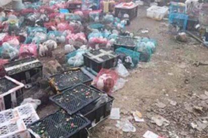 Horror en China: encuentran a 4.000 perros, gatos y conejos muertos dentro de cajas en un depósito