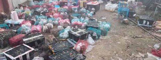 Horror en China: encuentran a 4.000 perros, gatos y conejos muertos dentro de cajas