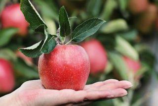 Frutas de otoño: ricas, saludables y apetecibles