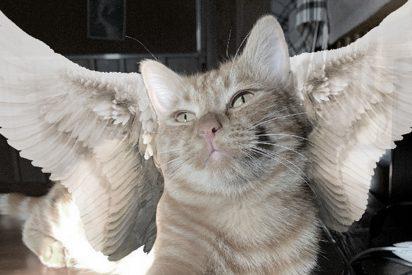 Muere atropellado por un coche 'Símbochka', el gato tiktoker de Kazajistán