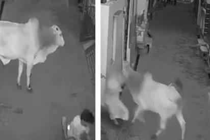 El toro ataca a una anciana y su nieto se juega el pellejo por salvarla
