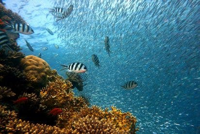Descubren un coral más alto que el Empire State neoyorquino: 500 metros