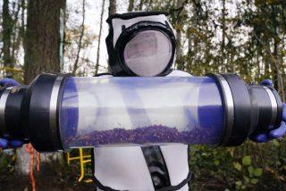 Destruyen el primer nido de avispones asiáticos 'asesinos' de EE.UU: Los insectos fueron 'aspirados' con un artefacto especial