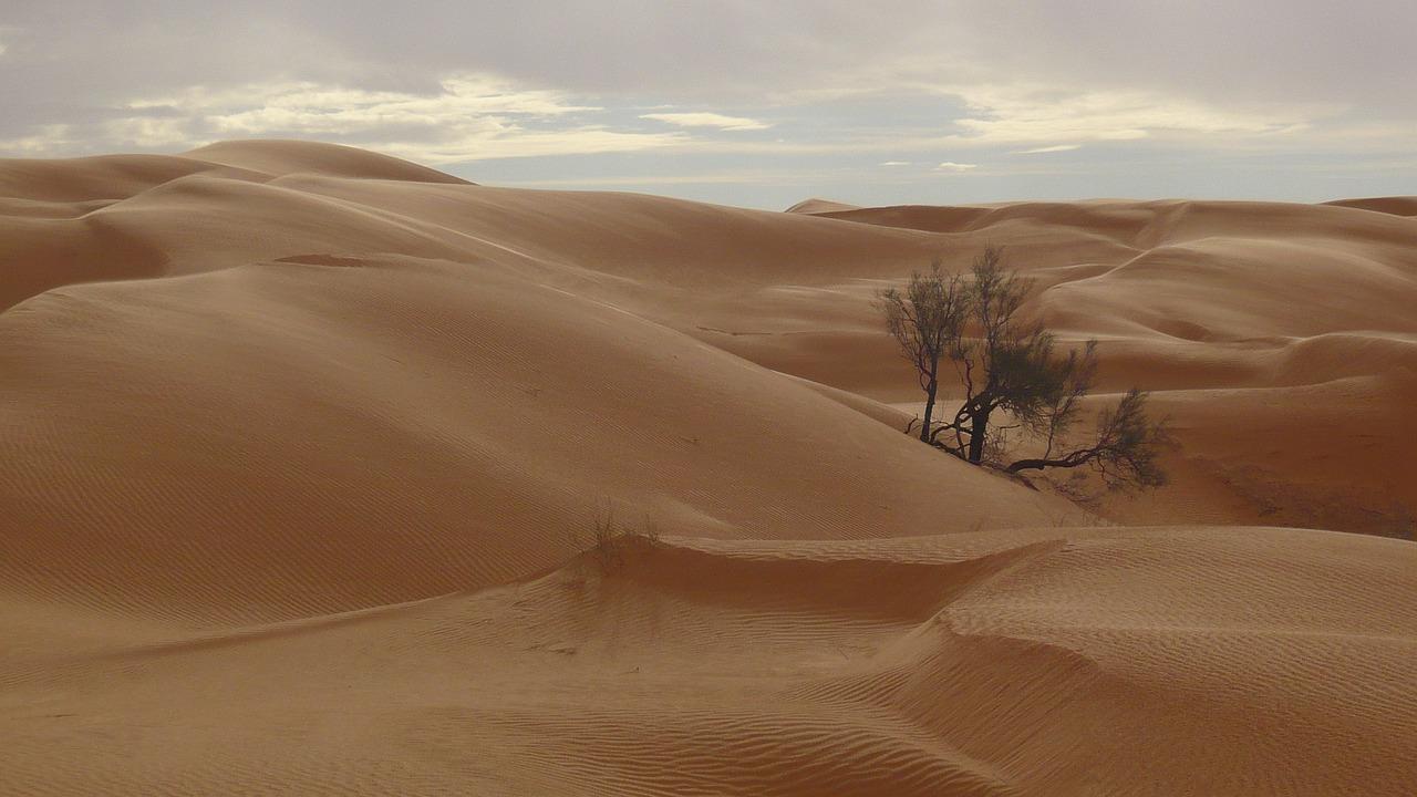 ¿Árboles en el desierto del Sahara?: Descubren más de 1000 millones dispersos y en solitario