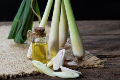 Propiedades del limoncillo o lemongrass