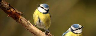 El pájaro de la derecha 'resucita' al de la izquierda, que parecía muerto tras chocar con un cristal