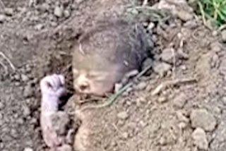 Salvan a un bebé enterrado vivo dentro de una granja de India