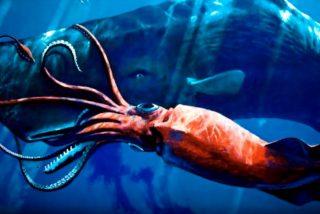 Encuentran a cinco calamares gigantes nadando en las aguas profundas de Australia