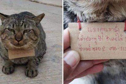 El gato desaparece durante cuatro días y regresa a casa 'endeudado' en pescado