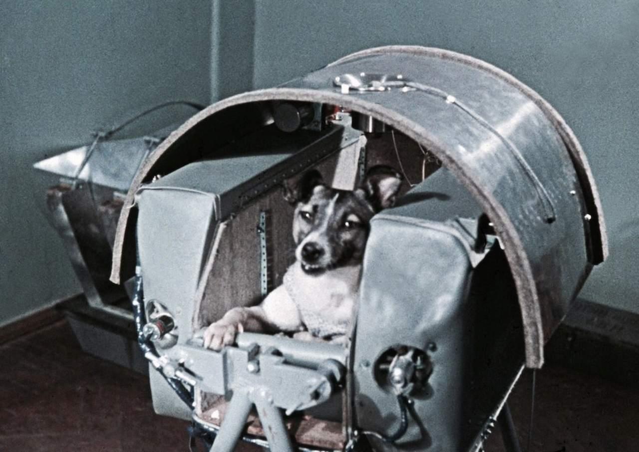 Laika: La triste historia de la perrita rusa que fue enviada a morir al espacio