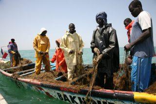 Alarma mundial por una extraña enfermedad que afecta a más de 500 pescadores en Senegal