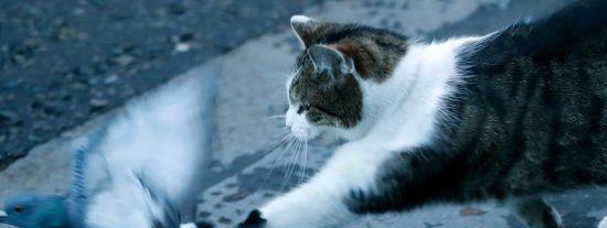 Pillan al gato de Boris Johnson lanzándose sobre una paloma a la puerta del 10 de Downing Street