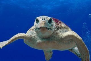 Los pescadores ayudan a la tortuga a escapar de las fauces del tiburón y el video se vuelve viral