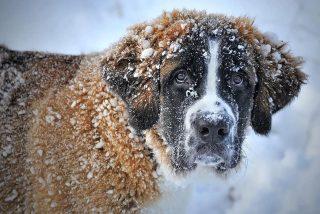 Llega 'Dora' y se quedará todo el puente: el primer temporal del año con nieve y un frío polar
