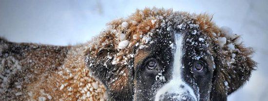Llega 'Dora' y se quedará todo el punte: el primer temporal del año con nieve y un frío polar