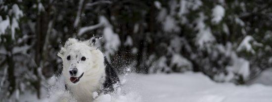 Pronostico del Tiempo: frío en la ciudad y nieve en le monte este 6 de diciembre de 2020