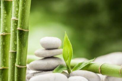 Extracto de bambú propiedades cosméticas