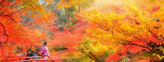 Kyoto: Qué ver y hacer en la capital milenaria de Japón