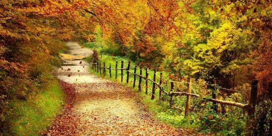 Adiós al otoño
