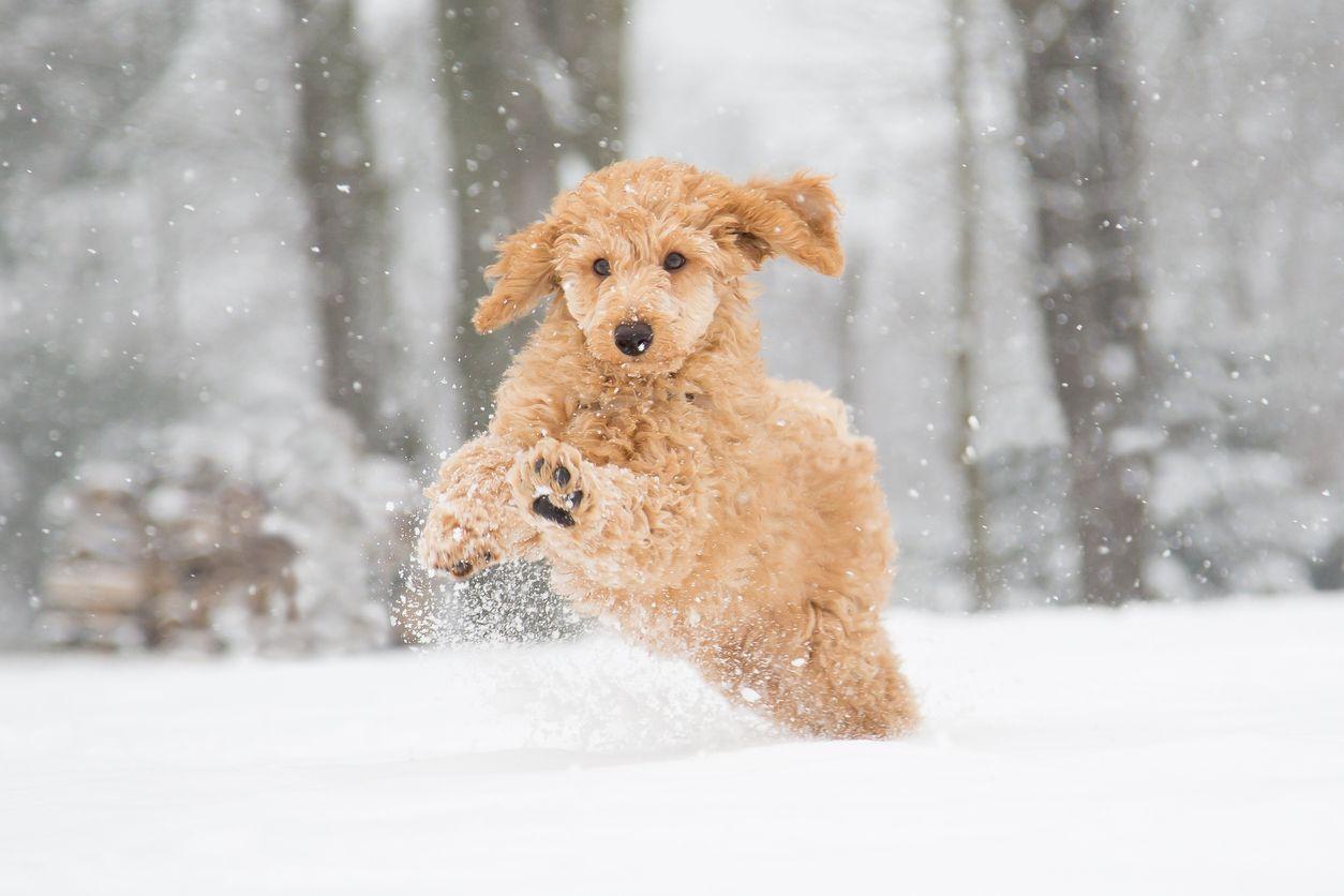 Consejos veterinarios para cuidar de las mascotas ante el temporal de frío