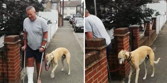 'Bill' el perro empático que cojea desde que escayolaron la pierna a su dueño