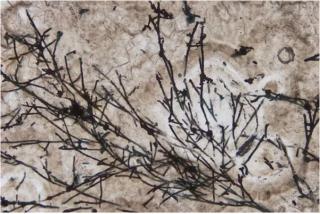 El calentamiento global deja al descubierto los restos fósiles terrestres más antiguos encontrados