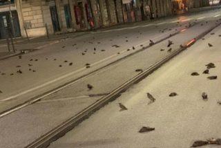 Las calles de Roma aparecen sembradas de pájaros muertos por los fuegos artificiales de Nochevieja