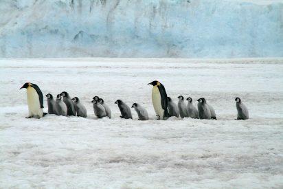 La técnica del pingüino y lo que tardarán en derretirse la nieve y el hielo