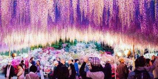 """Japón/ Luces de invierno: el espectáculo que transforma al """"País del Sol Naciente"""" en un cuento de hadas"""