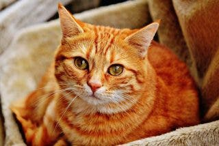 Esta gata se vuelve viral por impedir con ferocidad felina que su dueña beba cerveza