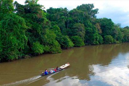 Selva del Amazonas: Gran reserva mundial de recursos medicinales