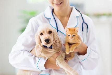 MSD Animal Health refuerza el mensaje sobre la importancia de la vacunación en mascotas