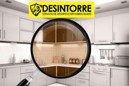 Eliminación de plagas domésticas ¿Qué insectos habitan las casas? por DESINTORRE