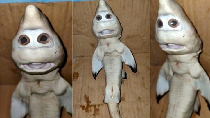 """Pánico en Indonesia: encuentran una cría de tiburón con """"rostro humano"""""""