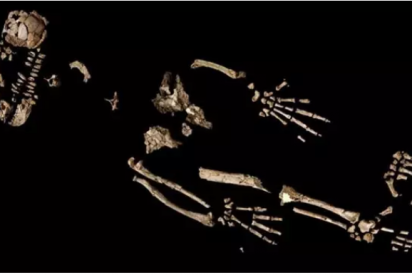 Un esqueleto desvela el 'gran salto evolutivo' de un homínido de 4,4 millones de años