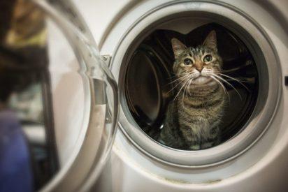 Condenan a 6 meses de cárcel a la chica de Ciudad Real que mató al gato 'centrifugándolo' en la lavadora