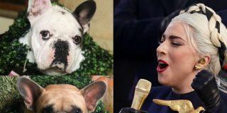 Un atracador pega un balazo al paseador de perros de Lady Gaga y le roba dos bulldogs franceses