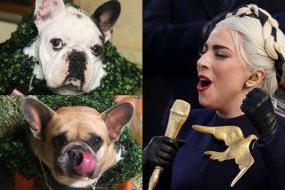 El instante en que el atracador pega un balazo al paseador de perros de Lady Gaga y le roba dos bulldogs