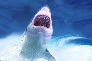 El instante en que el tiburón casi le arranca la mano al chaval y lo arrastra 20 metros por el agua
