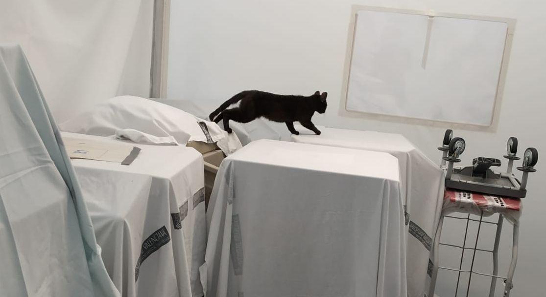 La izquierda ataca al Zendal y calla con los 'hospitales fakes' de Puig: hasta gatos en su interior